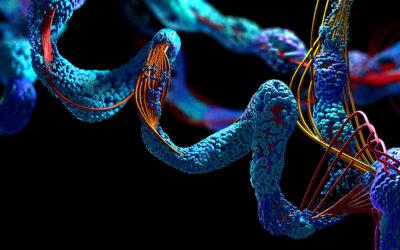 Proteiny-jaki mają wpływ nawłosy